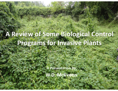 A Review of Some Biological Control Programs for Invasive Plants