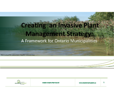 Invasive Plant Management Strategy Overview