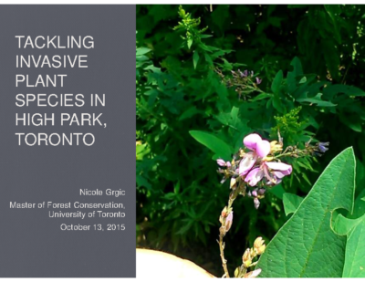 Tackling Invasive Plant Species in High Park, Toronto