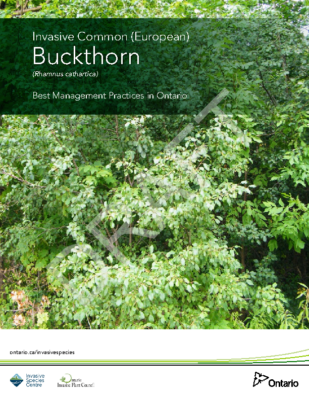 European Buckthron