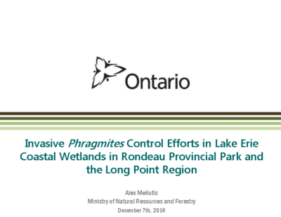 MNRF Phragmites Emergency Herbicide Use Project-Rondeau Park & Long Point Crown Marsh